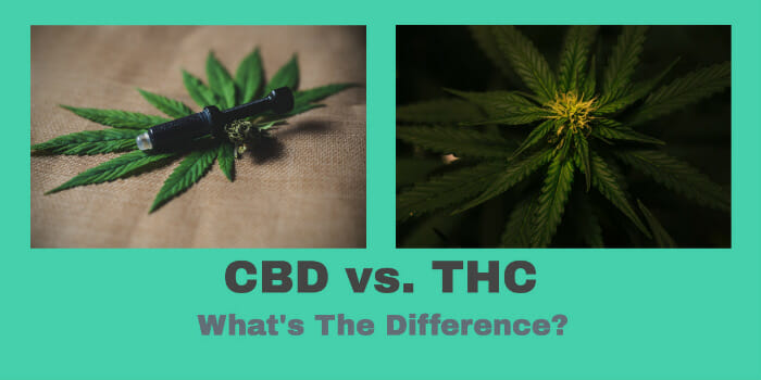 CBD vs. THC – What's The Difference?
