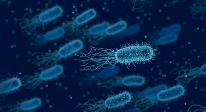 Bacteria in the gut is normal, but the population size cannot vary drastically.
