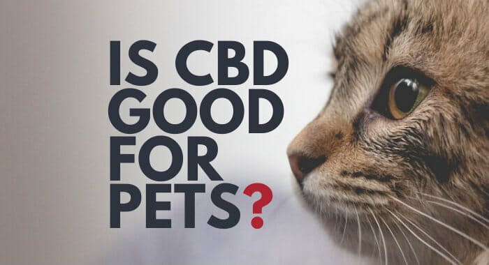 Is CBD Good For Pets?