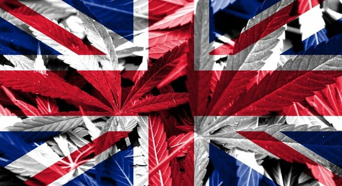 In the UK, CBD is exclusively produced from the flowers of industrial hemp plants.