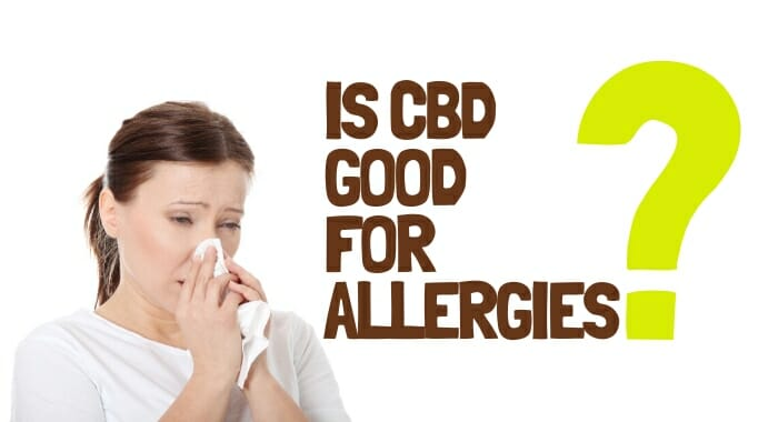 Is CBD Good For Allergies?
