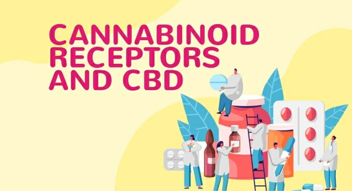 Cannabinoid Receptors And CBD