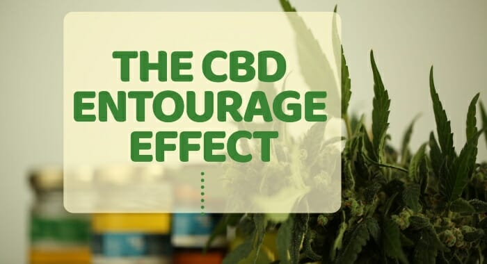 The CBD Entourage Effect