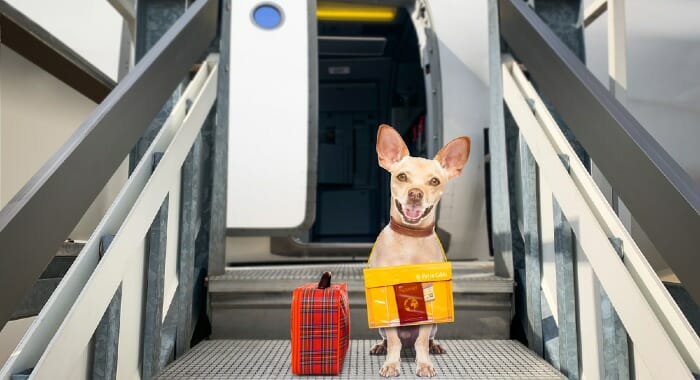 Flying with pets, especially the ones that don't stay in the cabin, might be a huge challenge for them.
