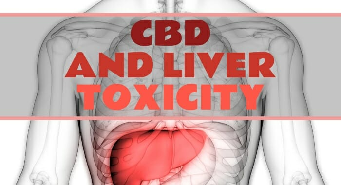 CBD And Liver Toxicity