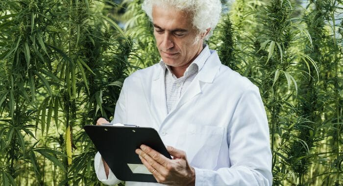 CBD and THC have been widely studied over the past years. However, there are less THC studies due to its illegal status in most countries.